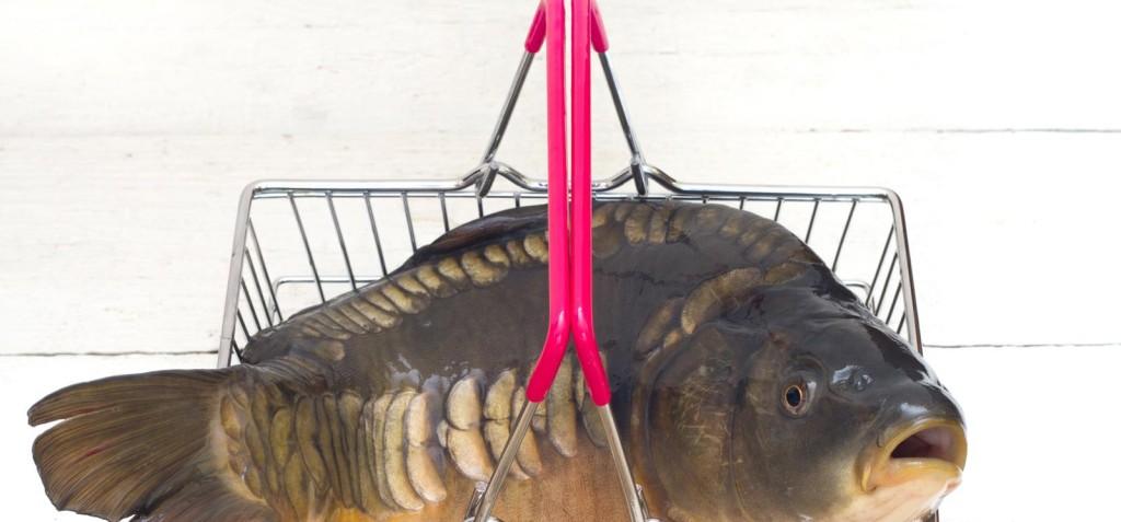 Onde é seguro comprar peixe?