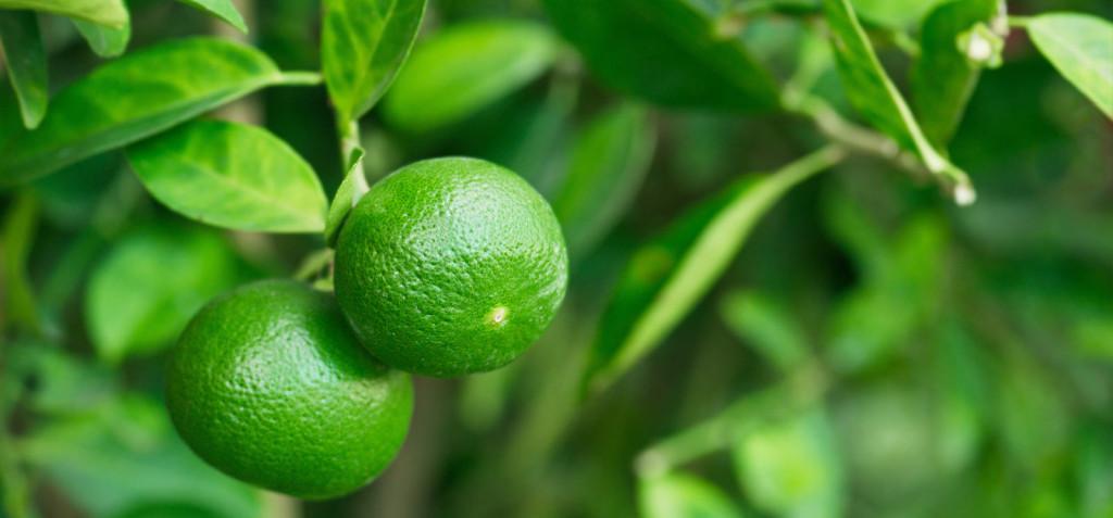 O peixe e o limão: as vantagens desse casamento