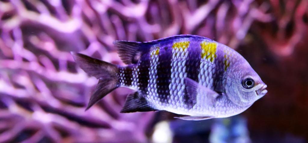 Peixe-pet: a arte de manter um aquário